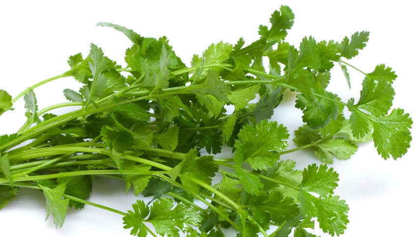 Super coriander: The leaf that can lower uric acid, creatinine levels
