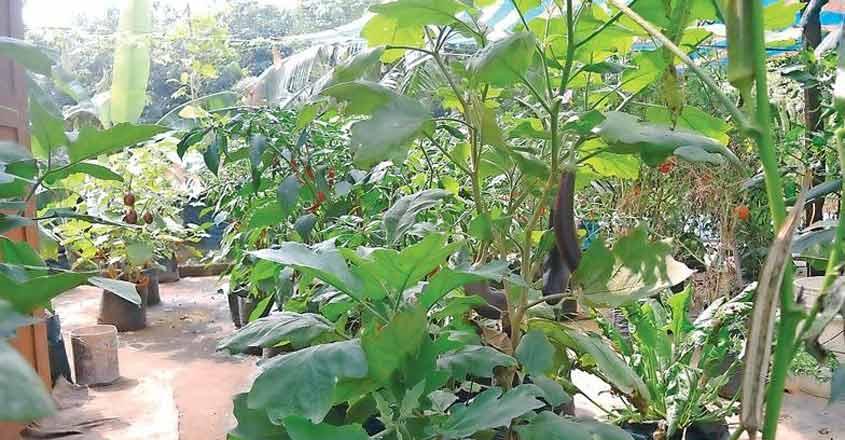 terrace-farming-1