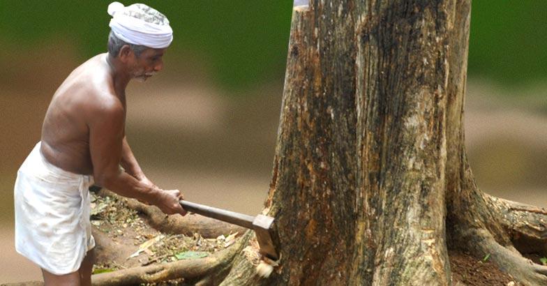 astro-tree-cutting