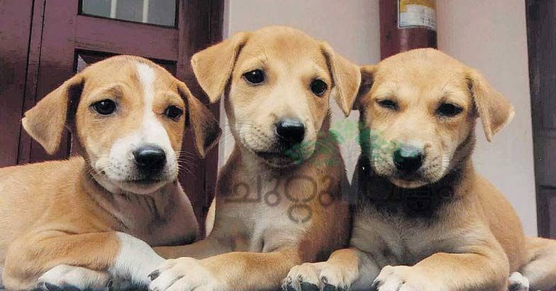 thrissur-dogs