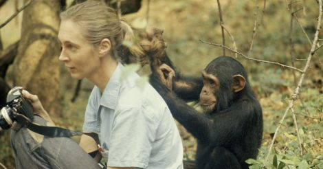 Jane-Goodall1