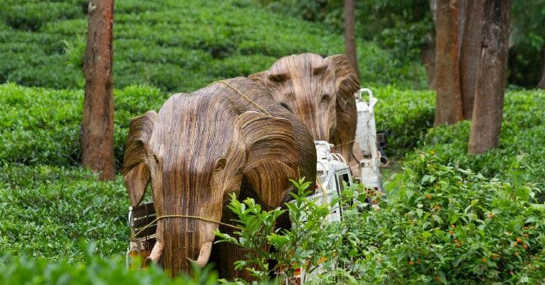 Lantana Elephants