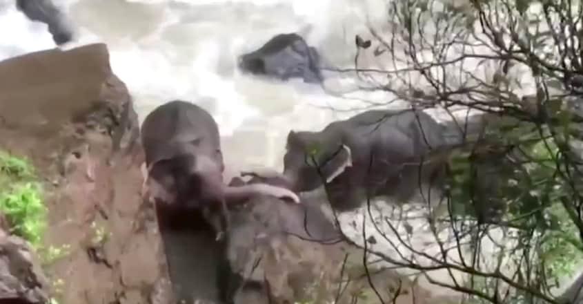 Elephants trapped in waterfalls