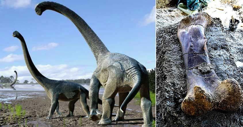 Paleontologists find giant dinosaur bone
