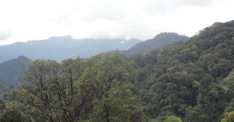 Lush forests of Arunachal
