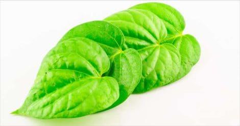 betel-leaves