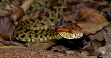 Snake Bite Health News