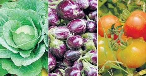 cabbage-brinjal-tomato
