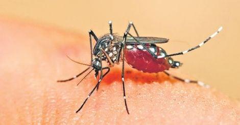 dengue-fever-mosquito