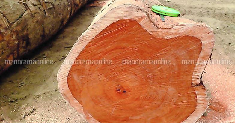 padauk-teak-wood-logs