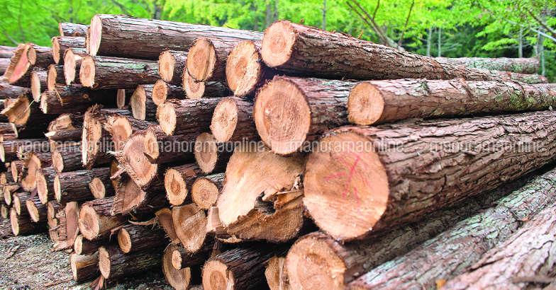 wood-tips