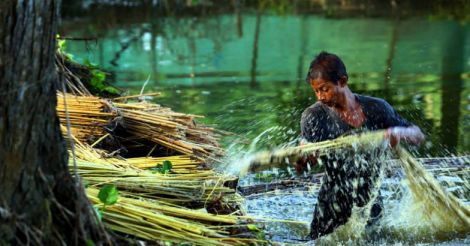 bamboo-farm