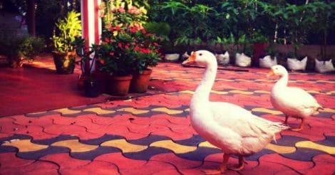 mathukutty-home-farm