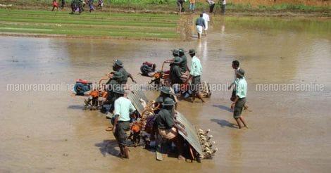 paddy-farm-work