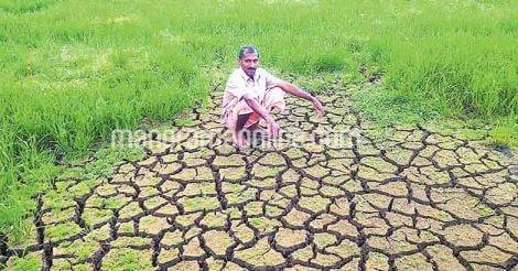 paddy-field-drought