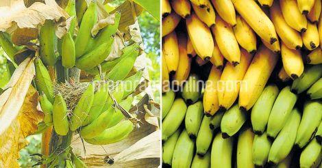 crop-banana-fruit