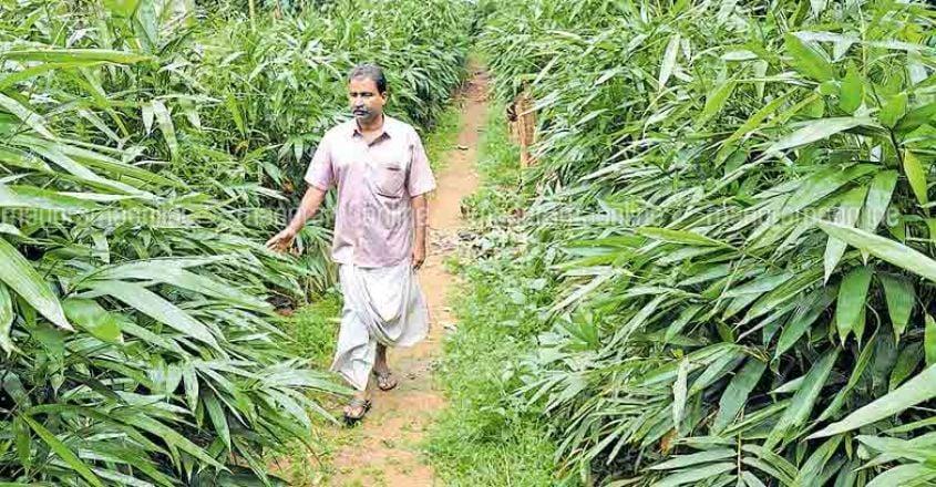 farmer-tr-rajappan
