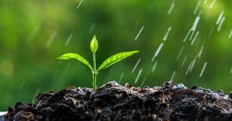 plant-seedling-rain-water