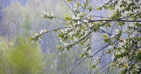 rain-flower