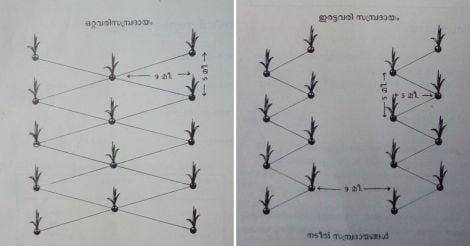 planting-coconut-palms-method1