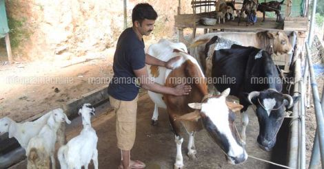raja-with-cow-goat