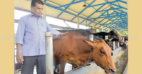 nizar-in-cow-farm-cherayi
