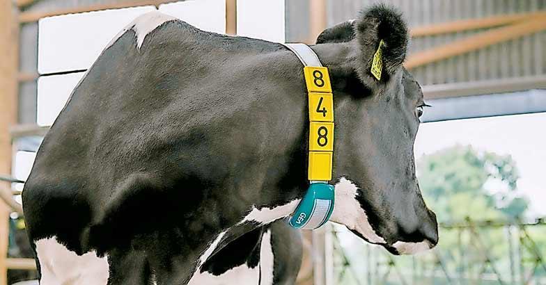 DairyFarming_CowScout_Neck_tcm11-19983