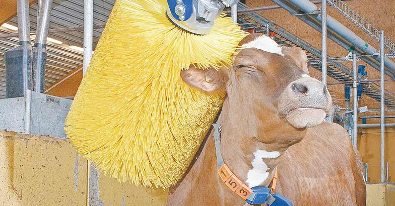 cow-brush
