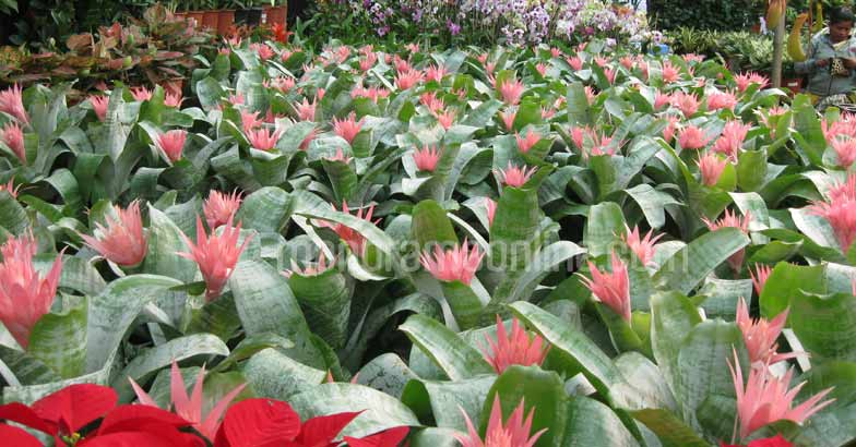pune-flower-nursery1