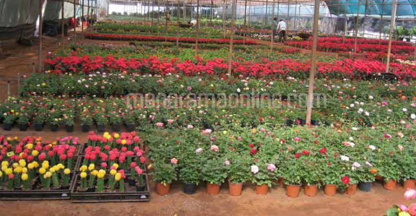 pune-flower-nursery4