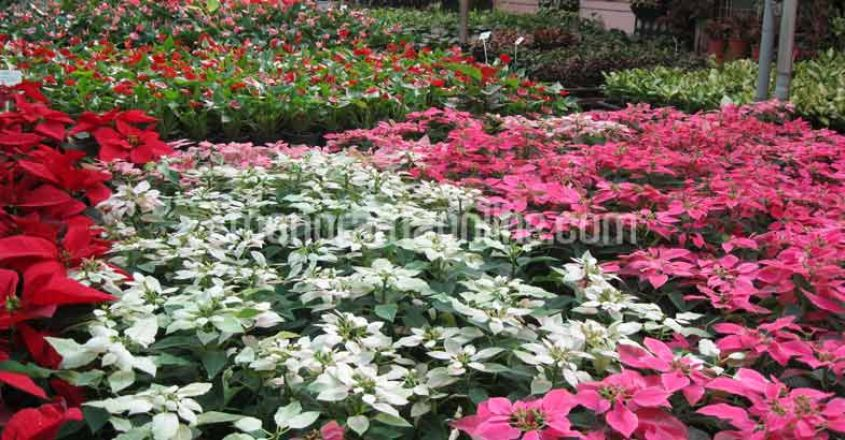 pune-flower-nursery5