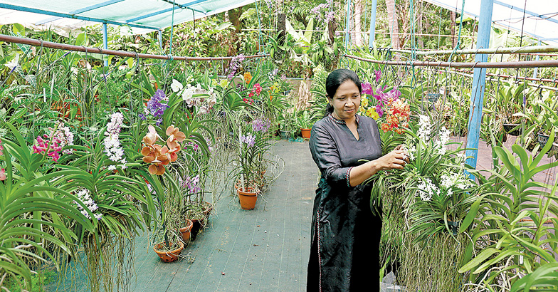 ancy-and-orchids-1