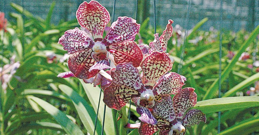 orchids-03