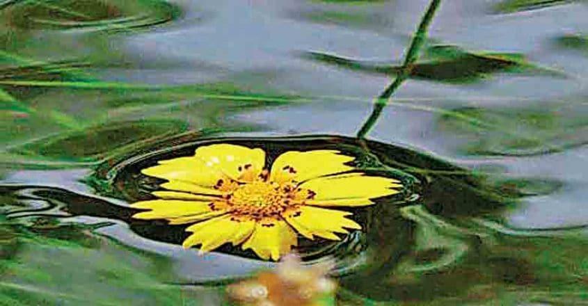 flood-flower-mariah-worbington