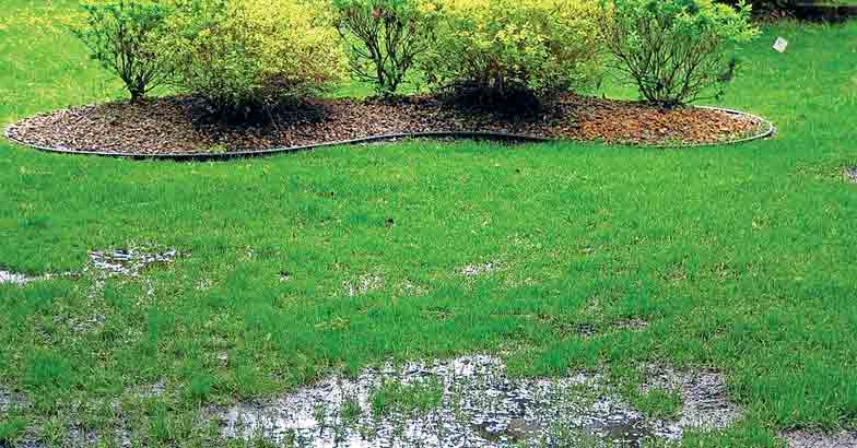 grass-lawn-after-floods-1