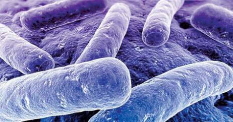 3602774390-int-bacteria-3col