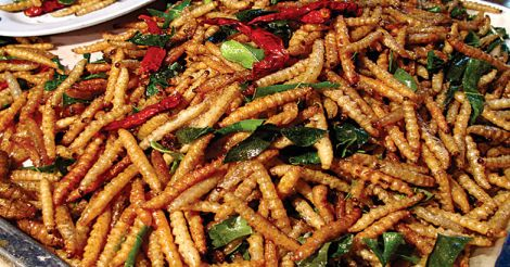 Insects Food