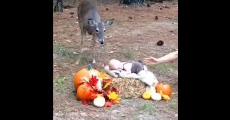 baby with deer