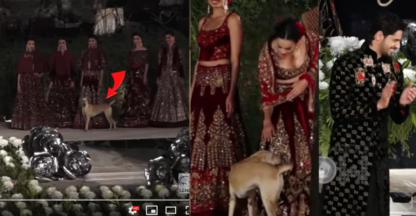 sidharth-malhotra-ramp-dog