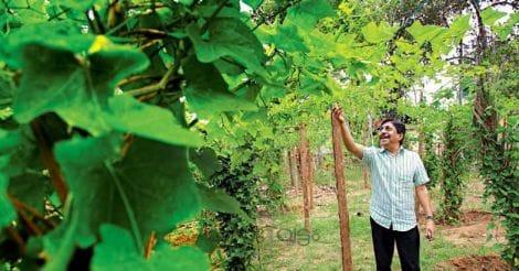 sreenivasan-vegetable-farm