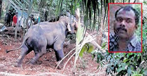 Palghat Elephant