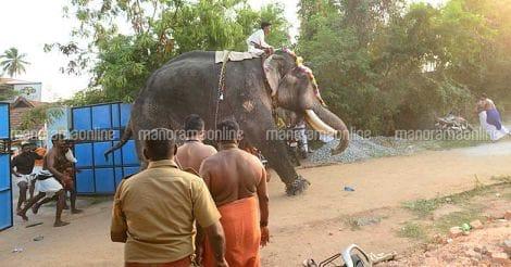 Elephant-tvm