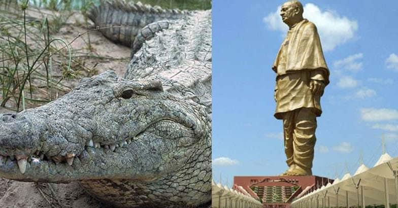 crocodile-sardar-patel