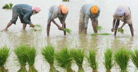 rice-farmer