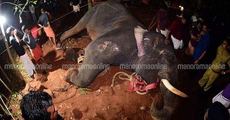 Palakkad Elephant Death