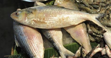 fish-sale