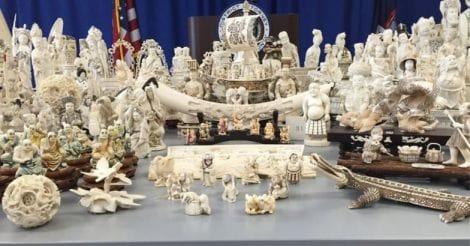 ivory-news