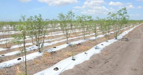 ishka-farms-moringa-muringa.jpg.image.784.410