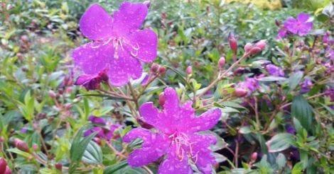 flower-show-munnar2