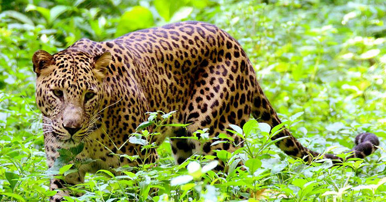 Kabini-Wildlife1